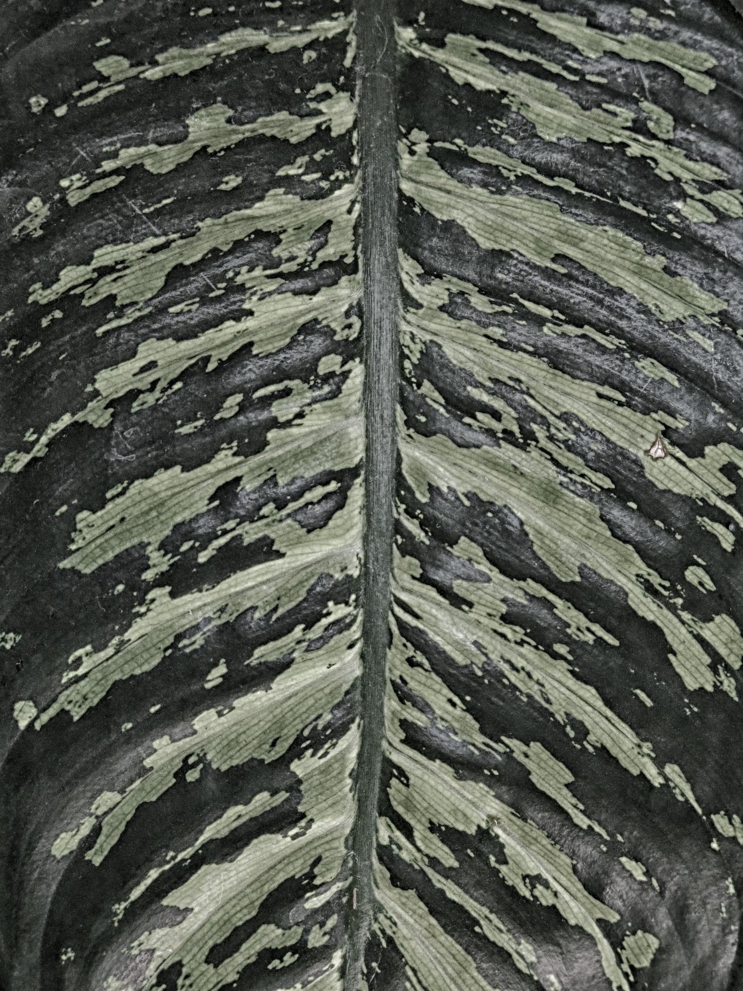 Esqueleto - Noviembre 15, 2014
